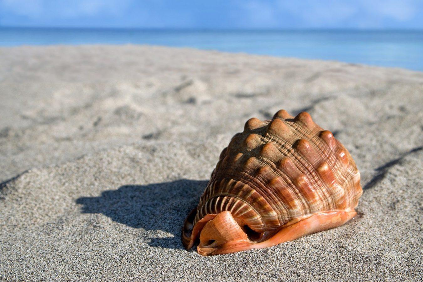 sea-shell-6495338_1920